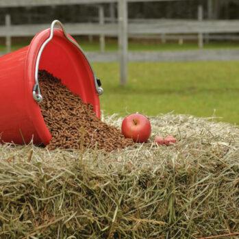 HORSE FEEDS